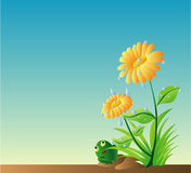 Watering Daisy And A Green Fro. Illustrations vector of Watering Daisy And A Green Frog Royalty Free Stock Photography