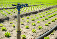 Watering equipment fields Stock Photography