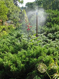 Watering exotic plants. In a city park Royalty Free Stock Image