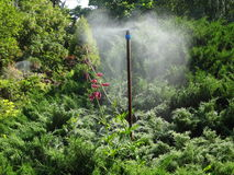 Watering exotic plants. In a city park Royalty Free Stock Photography