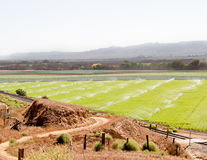 Watering fertile calif farmland Royalty Free Stock Image