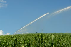 Watering on a field of sugar Stock Image