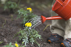 Watering flower. Boy Stock Photography