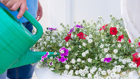 Watering a flower bed royalty free stock photos