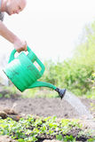Watering the flower bed strawberries Stock Photos