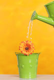 Watering a flower Stock Images
