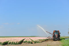 Watering the flower bulbs Stock Photos