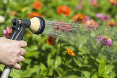 Watering flower garden Royalty Free Stock Photo