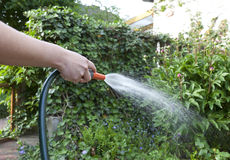 Watering the flowerbed. Royalty Free Stock Images