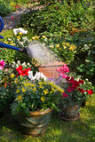Watering flowerpots with new plants Stock Photography