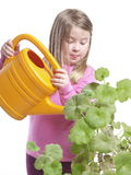 Watering flowers. Girl is watering flowers on white background Stock Image