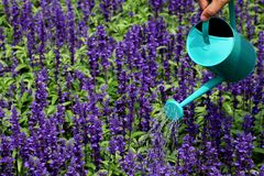 Watering flowers Royalty Free Stock Photo
