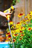 Watering Flowers. In summer garden stock image