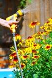 Watering Flowers Stock Image
