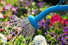 Watering flowers Royalty Free Stock Image