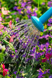 Watering flowers Stock Images