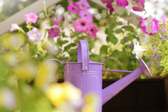 Watering flowers in balcony. With watering can stock photography
