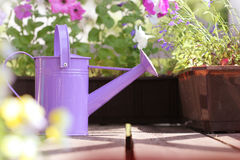 Watering flowers in balcony Royalty Free Stock Images