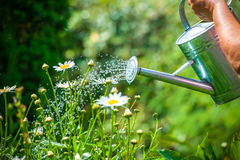 Watering flowers Stock Image