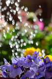 Watering flowers Royalty Free Stock Images
