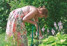Watering the flowers Royalty Free Stock Photo