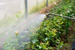 Watering flowers in garden Stock Photo