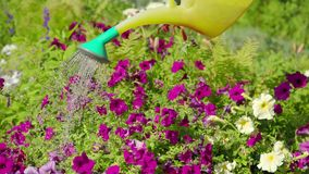Watering flowers in the garden of a country house. Close up view stock video footage