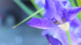 Watering the flowers stock video footage