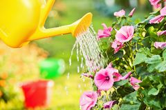 Watering flowers in garden Royalty Free Stock Photography