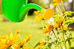 Watering flowers in garden Royalty Free Stock Image