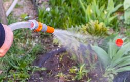 Watering flowers in the garden with a watering tool royalty free stock photos