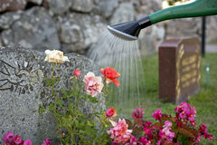 Watering flowers on grave. Watering of pink roses and other flowers by gravestone Royalty Free Stock Photography