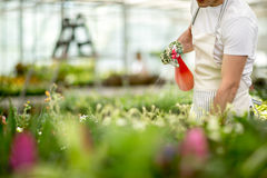 Watering flowers on tables Royalty Free Stock Image