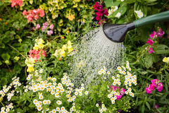 Watering flowers Royalty Free Stock Photography