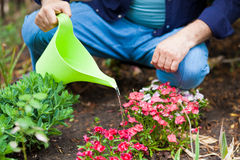 Watering flowers with a watering can Royalty Free Stock Images
