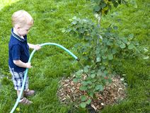 Watering the garden. Young boy waters the garden royalty free stock photo