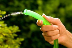 Watering the garden Stock Image