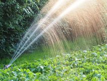 Watering garden. Automatic watering of a garden growing vegetables with visible drops royalty free stock image