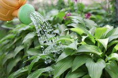 Watering the garden bed Royalty Free Stock Photography