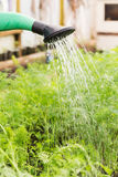 Watering of the garden bed Royalty Free Stock Photography
