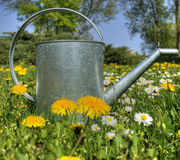Watering garden can as spring symbol royalty free stock photo