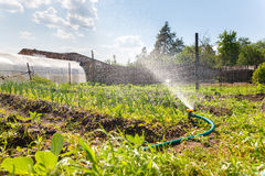 Watering garden equipment Royalty Free Stock Photo