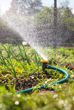 Watering garden equipment Royalty Free Stock Images