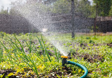 Watering garden equipment Royalty Free Stock Photos
