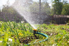 Watering garden equipment Stock Image