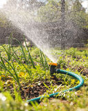 Watering garden equipment Royalty Free Stock Image