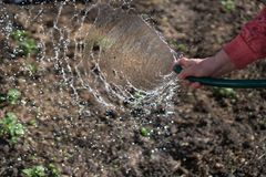 Watering garden equipment - woman's hand clamps a hose for watering plants. Gardener with watering hose and sprayer water on the. Vegetable stock photo