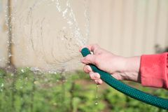 Watering garden equipment - woman's hand clamps a hose for watering plants. Gardener with watering hose and sprayer water on the. Vegetable stock images