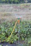 Watering garden equipment Royalty Free Stock Image