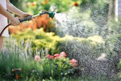 Watering garden flowers with hose royalty free stock images